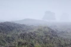 Lone tree in dense fog on hill stock image