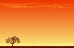 Lone Tree in the Desert Royalty Free Stock Photos