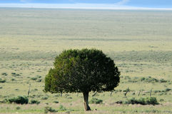 Lone tree in desert landscape Royalty Free Stock Photography
