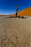 Lone tree in a desert Stock Photo
