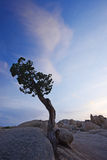 Lone tree in desert Royalty Free Stock Photo
