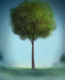 Lone Tree - Digital Painting. Digital painting of a painterly tree with bushy green leaves Royalty Free Stock Images