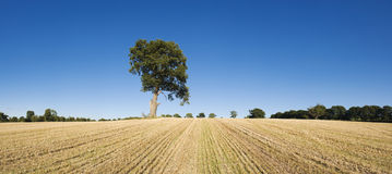 Lone tree in dry landscape. Royalty Free Stock Photography