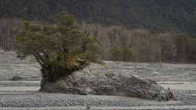 Lone tree in a dry riverbed royalty free stock image