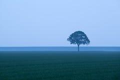 Lone tree in dusk. Lone tree on field in dusk Stock Image