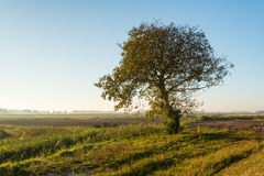 Lone tree in early morning sunlight Royalty Free Stock Image