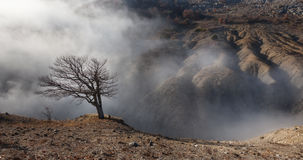 Lone tree on the edge of a ravine in the fog Stock Image