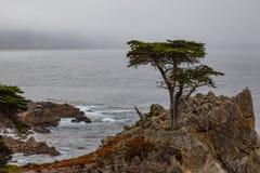 lone tree för cypress royaltyfria bilder