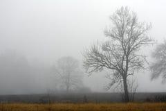 lone tree för dimma Arkivbilder
