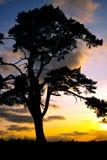 lone tree för gryning Arkivfoton