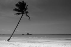 lone tree för kokosnöt Royaltyfri Bild