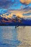 The Lone Tree Famous Lake Wanaka Landmark royalty free stock photography