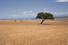 Lone tree in farm fields landscape Royalty Free Stock Photo