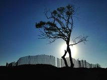 Lone Tree And Fence At Dusk. A lone tree stands tall with a wooden fence behind it. A moody photo at sunset with the setting sun behind the tree in the Royalty Free Stock Photography