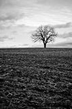 Lone Tree in a Field Royalty Free Stock Photo