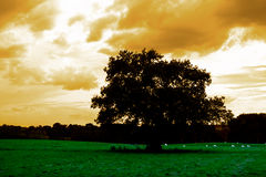 Lone tree in field. Lone tree in the field with sheeps grazing in sureal twilight landscape Stock Images