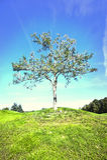 Lone tree in field Stock Image