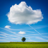 Lone Tree in Field with Big Cloud Above. Wallonia, Belgium Royalty Free Stock Images