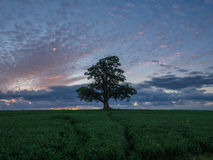 Lone Tree in Field. Lone field in tree with clouds Royalty Free Stock Images