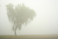 Lone Tree. In Field During Foggy Day Royalty Free Stock Photos