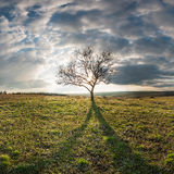 Lone tree in a field. Landscape with a lone tree in a field on a hill Royalty Free Stock Photos