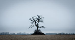 Lone tree on a field Royalty Free Stock Images