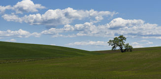 Lone Tree in the Field. Palouse with its beautiful rolling hill is a very popular place in Eastern Washington Stock Photos