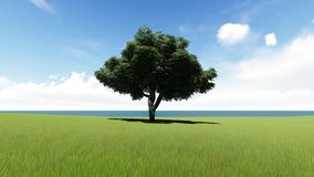 Lone tree in field seamless footage. Wood with lush crown growing alone near pond at daytime looped animation. Loneliness concept. Tree with green leaves royalty free illustration