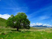 Lone tree in field with sky. Lone tree in field with blue sky, clouds and mountains in the distance.  Okanogan, Wa Royalty Free Stock Photography