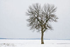 Lone tree in a field of snow. Scenic view of a single tree in a field of snow Stock Photo