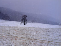 Lone tree field snow winter. Lone tree in field during snow storm Royalty Free Stock Image