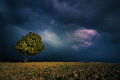 Lone tree. In a field before the storm Stock Photo