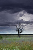 Lone tree in a field with a stormy sky Stock Photo