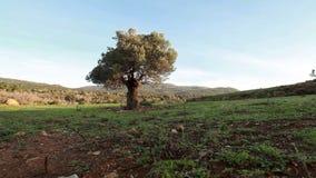 Lone tree in field. Video of lone tree in field stock video