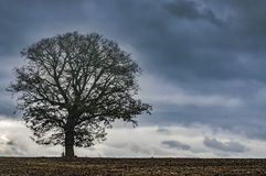Lone tree on a field. View of the autumn plowed field with a lone tree in a landscape Stock Image