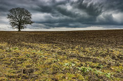 Lone tree on a field. View of the autumn plowed field with a lone tree in a landscape Royalty Free Stock Image