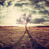 Lone tree in a field. Vintage landscape with a lone tree in a field on a hill Stock Images