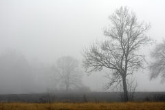 Lone tree in the fog Stock Images