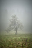 Lone tree with fog Royalty Free Stock Photos