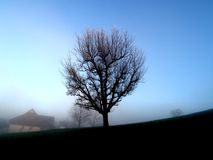 Lone Tree in Foggy Field. With a house and blue background royalty free stock image