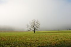 Lone Tree in Foggy Field. A lone tree in a foggy morning field - Cades Cove, Smoky Mountains NP, USA royalty free stock image