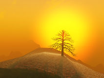 Lone Tree Foggy Sunrise Royalty Free Stock Photography