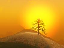 Lone Tree Foggy Sunrise. A lone winter tree against a foggy sunrise Royalty Free Stock Photography