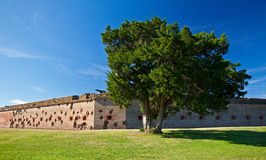 Lone Tree at Fort Pulaski Royalty Free Stock Photography