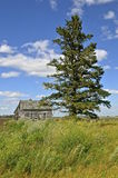 Lone tree in front of abandoned house Stock Image