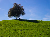 A lone tree on a grass field and a blue sky Stock Photos