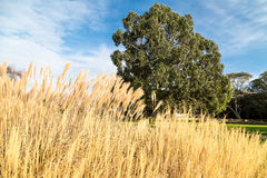 Lone tree with grass foreground stock images