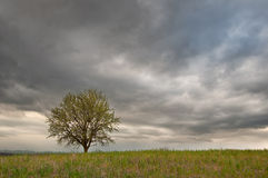 Lone tree in a green field with cloudy sky Royalty Free Stock Photos