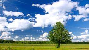 Lone tree in green field Royalty Free Stock Photo