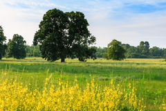 A lone tree in a green field Royalty Free Stock Photography